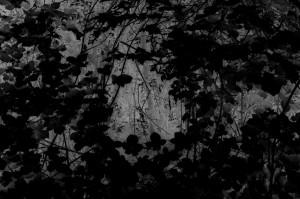 Waldszene 5