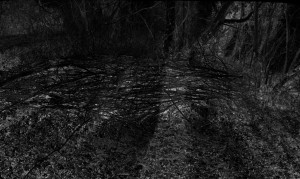 Waldszene 3