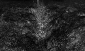 Waldszene 7